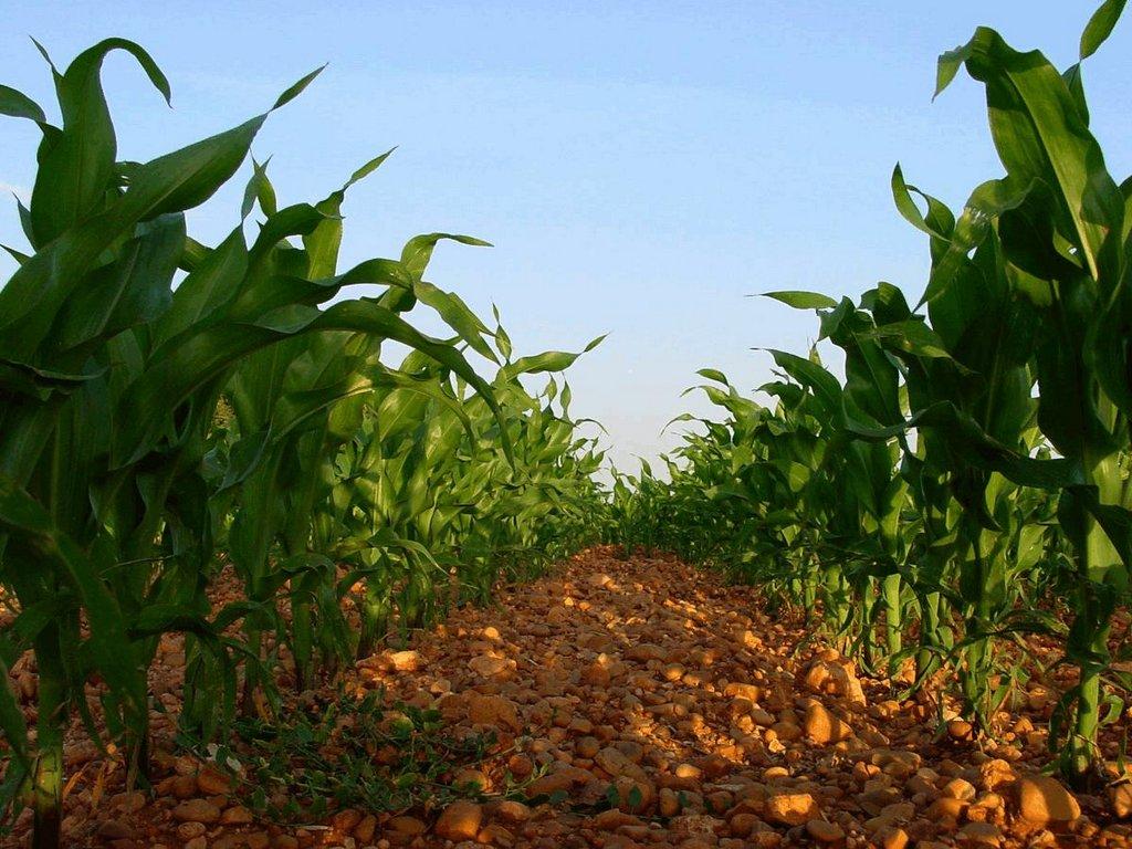 cultivos_argentina3_09