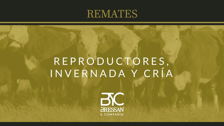 rep-inv-y-cria